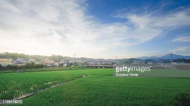 agriculture village in takachiho, miyazaki, kyushu. - 水田 ストックフォトと画像
