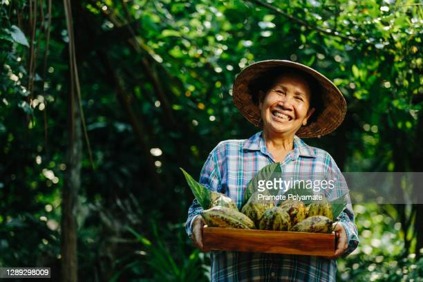agriculturist holds the cocoa fruit in the crate with a happy smile. - farmer stock pictures, royalty-free photos & images