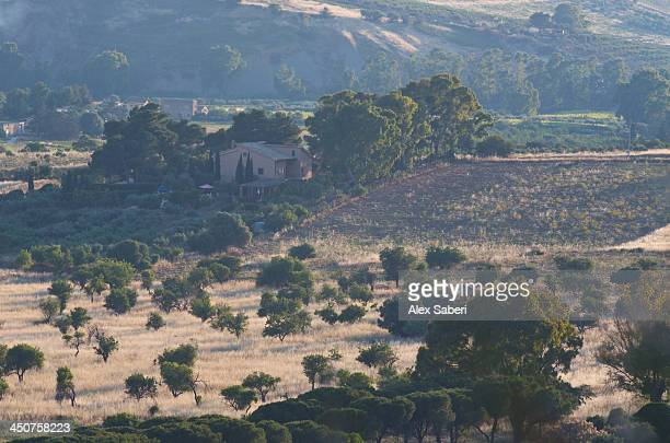 agrigento , sicily , italy - alex saberi stock pictures, royalty-free photos & images