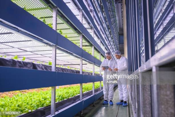 agri-tech specialists examining stacks of indoor crops - caucasian appearance stock pictures, royalty-free photos & images