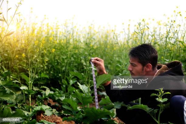 Cultivo de mostaza control Ingeniero Agrónomo