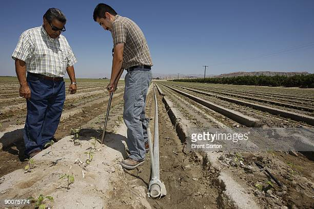 Agronomist Jose Arabs rights and Farm Manager Steve Lopez left measure soil moisture and collect samples for salinity testing in a new BellPeppers...