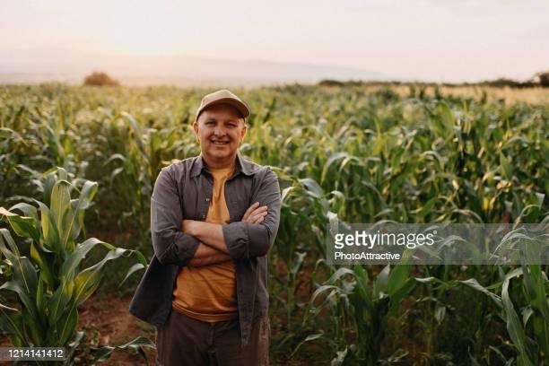 agrônomo - culturas - fotografias e filmes do acervo