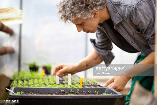 agronomist working at modern greenhouse - agronomist stock pictures, royalty-free photos & images