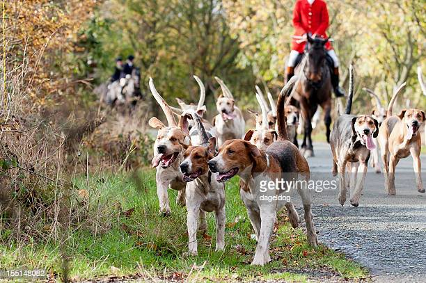 ahead of the game - fox hunting stock pictures, royalty-free photos & images