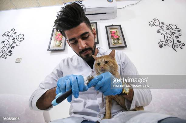 Ahmad Taher a 24yearold senior veterinary student clips the claws of a cat staying for short periods at a cat hotel which he manages in the southern...