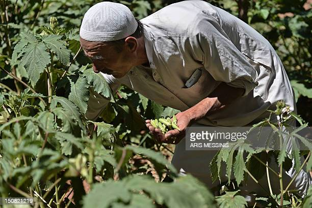 Ahmed Zahra collects vegetables from his garden outside the northern Syrian city of Aleppo on August 26, 2012. When the Syrian uprising started,...