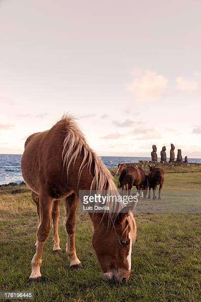 ahu taha in easter island - horse easter stock pictures, royalty-free photos & images