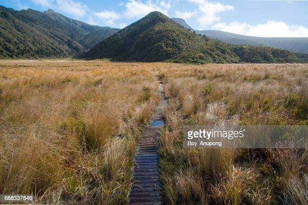 Ahukawakawa Swamp during hiking Pouakai Crossing in Taranaki region of western New Zealand.