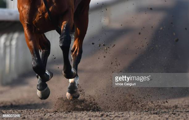 Aidan 'Brien runner Deauville kicks up the dirt on the All Weather Track during a Longines Hong Kong International Trackwork Session at Sha Tin...