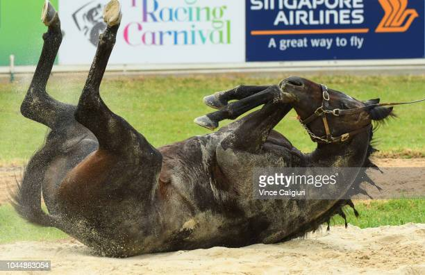 Aidan O'Brien trained Cliffs of Moher enjoys a roll in the sand during a trackwork session at Werribee Racecourse on October 3 2018 in Melbourne...