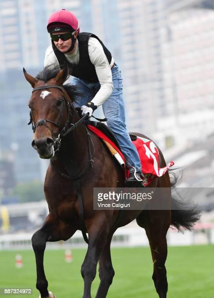 Aidan O'Brien trained War Decree during a Longines Hong Kong International Trackwork Session at Sha Tin racecourse on December 7 2017 in Hong Kong...