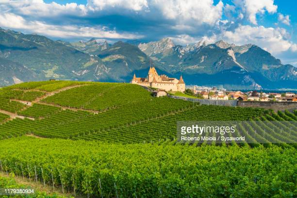 aigle castle and vineyards, vaud canton, switzerland - ヴォー州 ストックフォトと画像