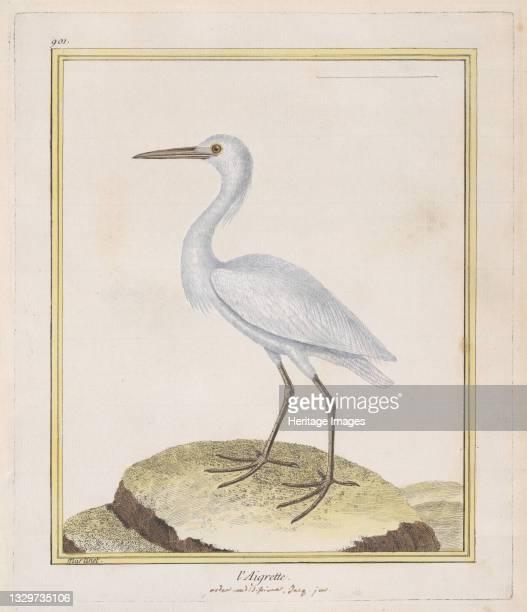 """Aigrette , 1770-86. From """"Histoire Naturelle Des Oiseaux"""" edited by Georges Louis Leclerc, le comte de Buffon. Artist François Nicolas Martinet."""