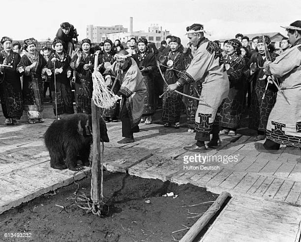 Ainu men capture a bear and then threaten it with bows and arrows as part of the Ainu Bear Festival The Ainus are the original people of Japan