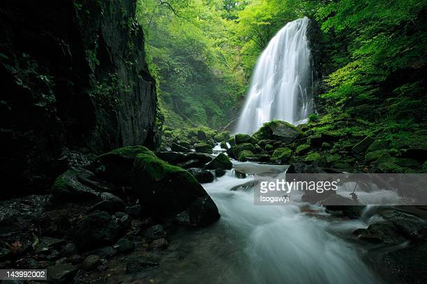 aioi-otaki falls - isogawyi stock pictures, royalty-free photos & images