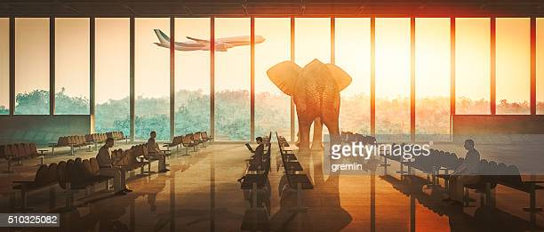 Aiport elephant watching airplane take off