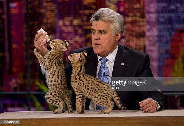 LENO Air Date 1/4/08 Episode 3469 Pictured Host Jay Leno with a serval an African wild cat on January 4 2008