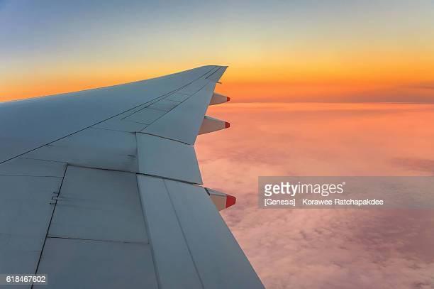 air plan wing in the morning sunrise - animal wing ストックフォトと画像