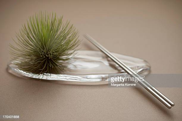 Air plant on a sushi plate with chopsticks