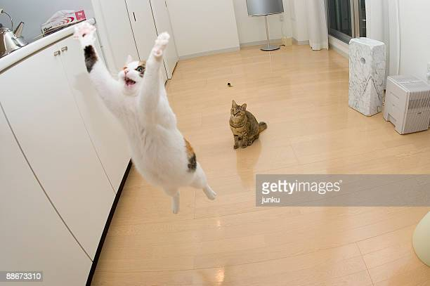 airborne cats  - funny cats stock photos and pictures