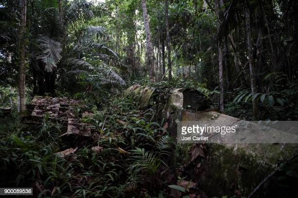 wwii aircraft overgrown in jungle in aitape, papua new guinea - papua new guinea stock pictures, royalty-free photos & images