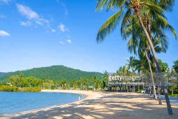 airlie beach, queensland, australia - queensland stock pictures, royalty-free photos & images