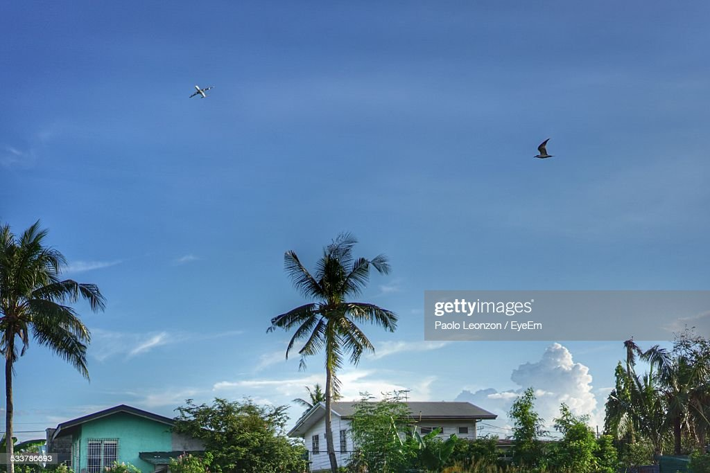 Airplane And Bird In Sky : Foto stock