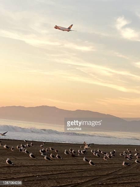 marina del rey usa airplane flying
