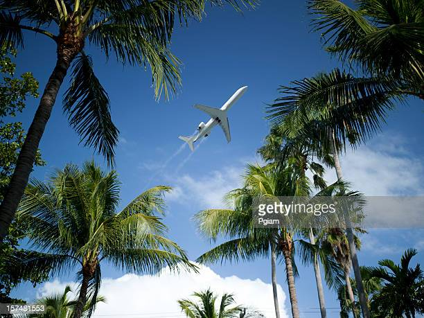 Airplane takes off between the palm trees
