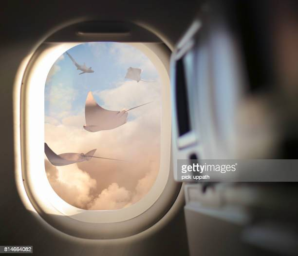 Airplane window with Stingrays in the sky
