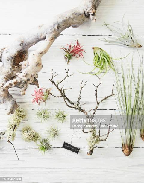Airplant Stand what you will need