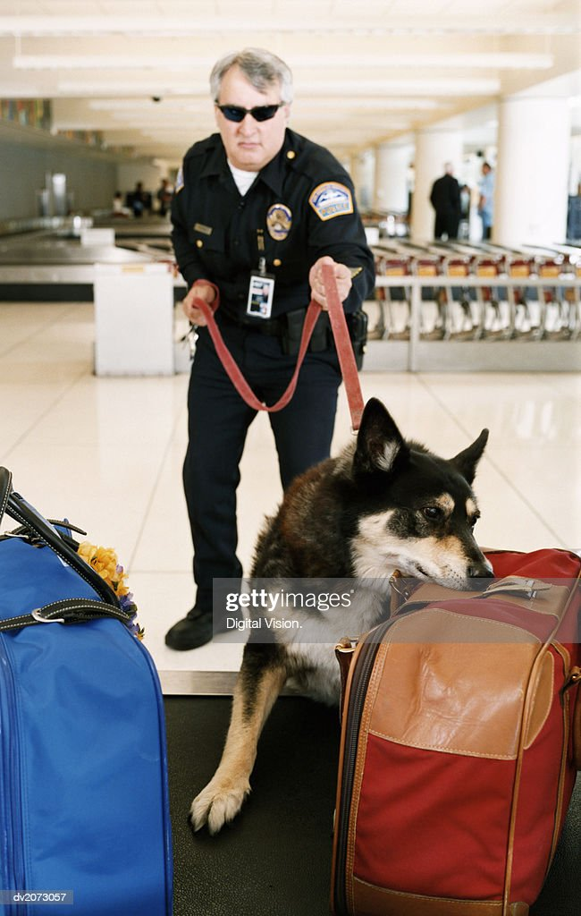 Airport Security Guard With a Sniffer Dog : Stock Photo