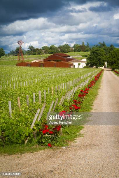 aisle of roses - gironde stock pictures, royalty-free photos & images