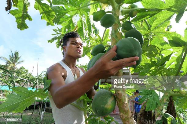 Aita Stanley checks the pawpaw in the Taiwanese funded Fatoaga Fiafia Garden which provides work and vegetables for the island on August 15 2018 in...