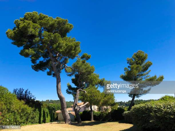 aix-en-provence, france: terrain des painters - italian cypress stock photos and pictures