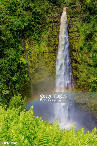 ʻakaka falls, big island, hawaii, usa - hawaii islands stock pictures, royalty-free photos & images