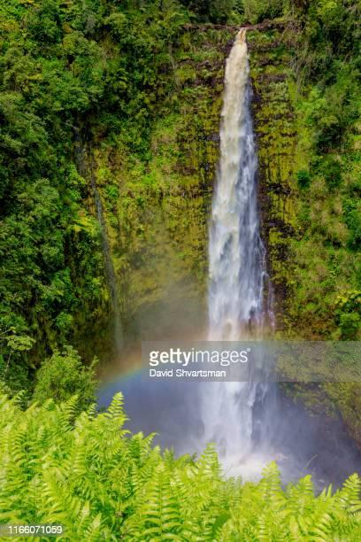 ʻakaka falls, big island, hawaii, usa - water fall hawaii stock pictures, royalty-free photos & images