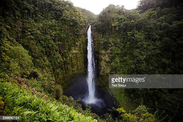 Akaka Falls in the Akaka Falls state Park The falls are 442 feet tall and is rated 612th in world heigh rating