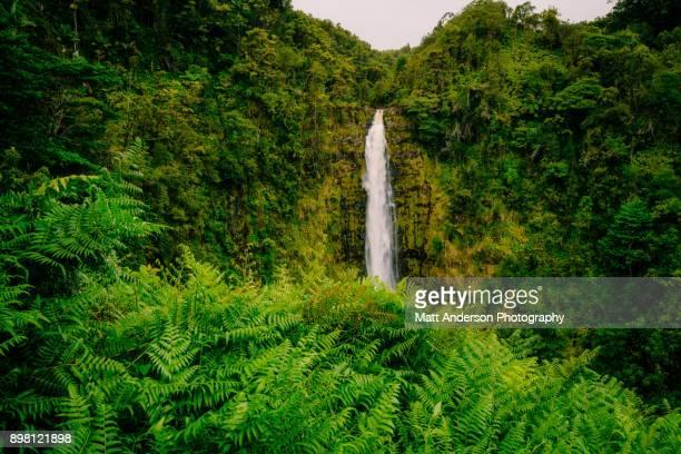 akaka falls #6 - ponto de referência natural - fotografias e filmes do acervo