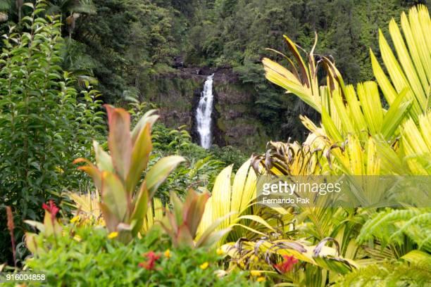 Akaka Falls State Park Big Island of Hawaii - Landscape and Greenery