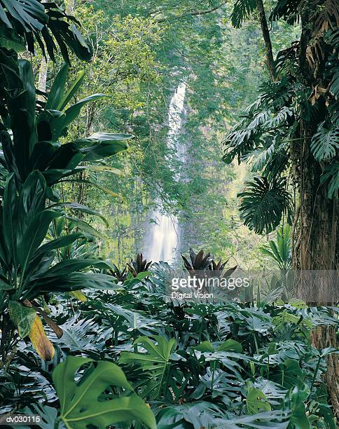 Akaka Falls State Park, Hawaii, Hawaiian Islands