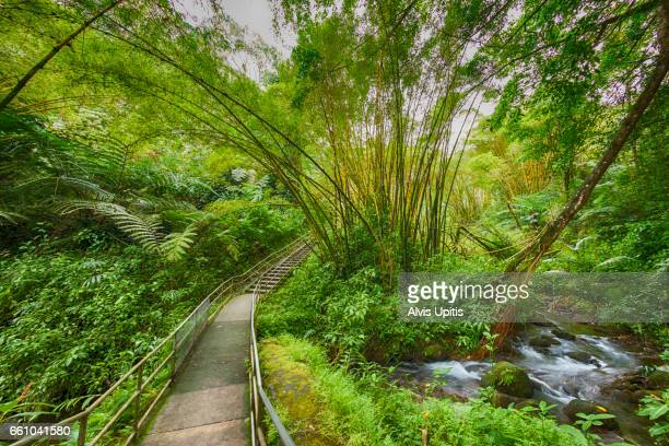 Akaka Falls State Park in Hawaii