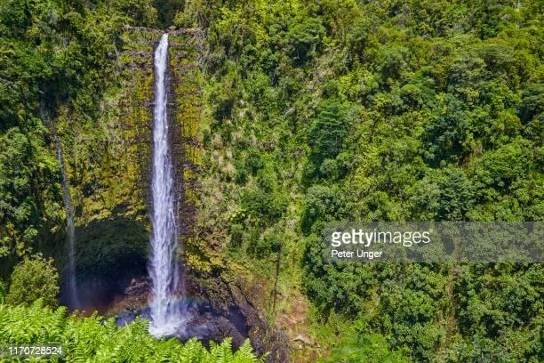 akaka falls,honomu,big island,hawaii,usa - hawaiian waterfalls stock pictures, royalty-free photos & images