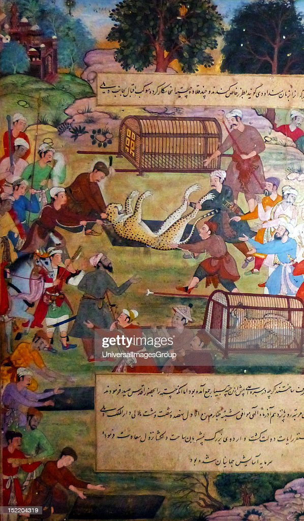 Akbar lifting captured cheetahs. From the Akbarnama (Book of Akbar). Comparison by Tulsi, painting by Narayan. Opaque watercolour and gold on paper, Mughal. This painting records the first occasion (in 1560) when Akbar hunted cheetahs. Animals were c : News Photo