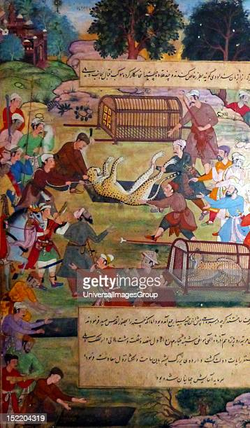 Akbar lifting captured cheetahs From the Akbarnama Comparison by Tulsi painting by Narayan