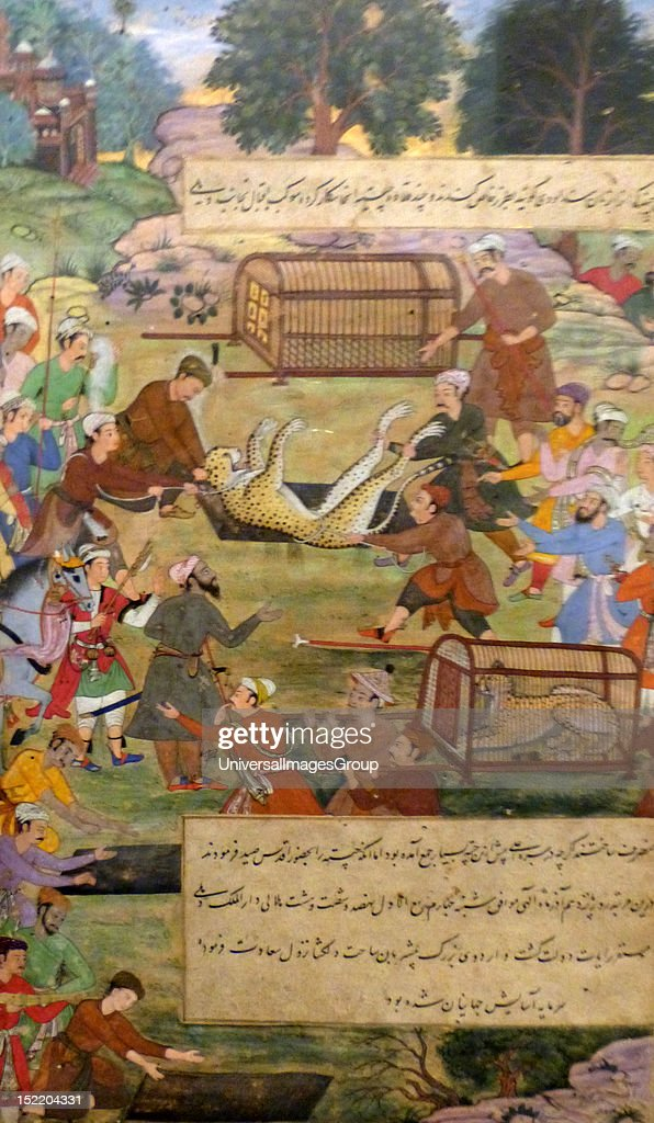 Akbar lifting captured cheetahs. From the Akbarnama (Book of Akbar). Comparison by Tulsi, painting by Narayan. Opaque watercolour and gold on paper, Mughal. This painting records the first occasion (in 1560) when Akbar hunted cheetahs.  : News Photo