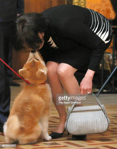 Akie Abe wife of Japanese Prime Minister Shinzo Abe holds 'Masaru' Akita inu dog presented to Pyeongchang Olympic Figure Skating Ladies Singles gold...