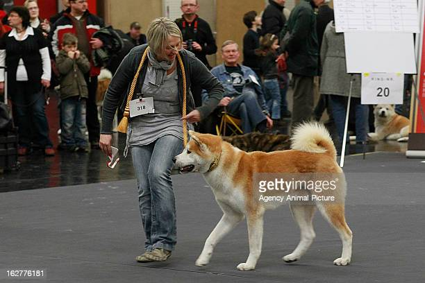 Akita Inu Championship at the CACIB dog exhibition at the Exhibition Centre Nuernberg on January 14 2012 in Nuernberg Germany