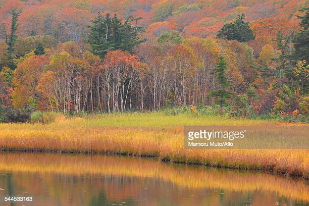 akita prefecture, japan - iwate prefecture stock pictures, royalty-free photos & images